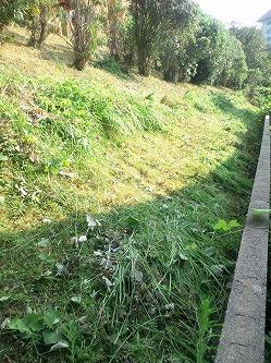 草刈り 福岡
