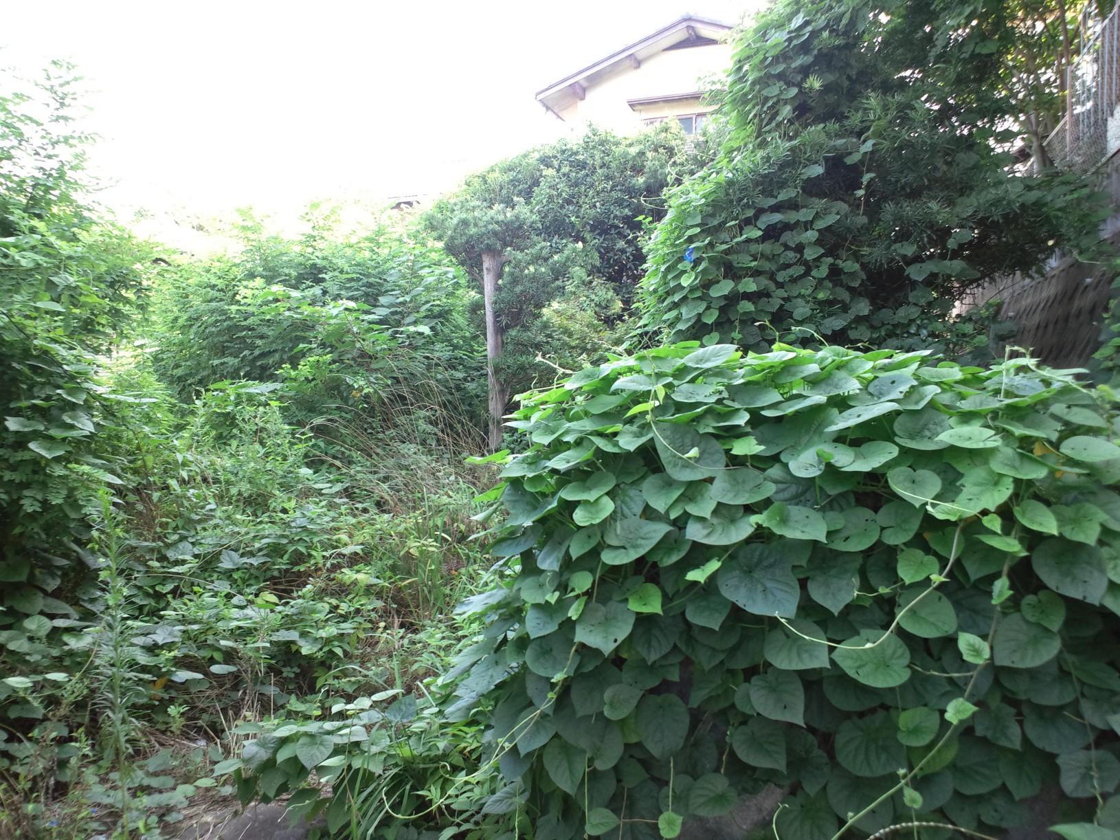 福岡 植木の伐採