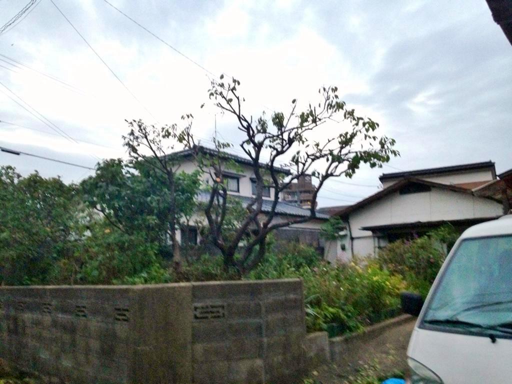 庭木の剪定 樹木伐採