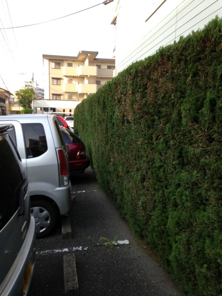 糸島市周船寺 剪定 刈り込み 植木屋