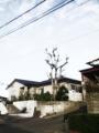 庭木剪定 福岡