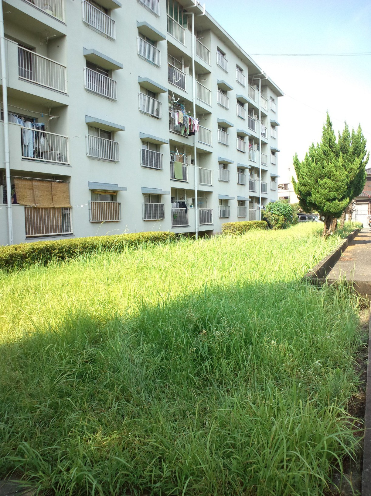 集合住宅 草刈り 福岡県
