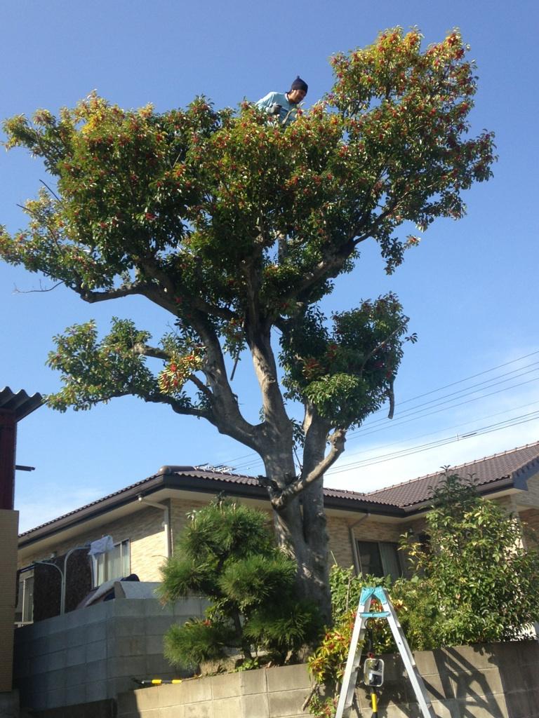 福岡 樹木伐採剪定
