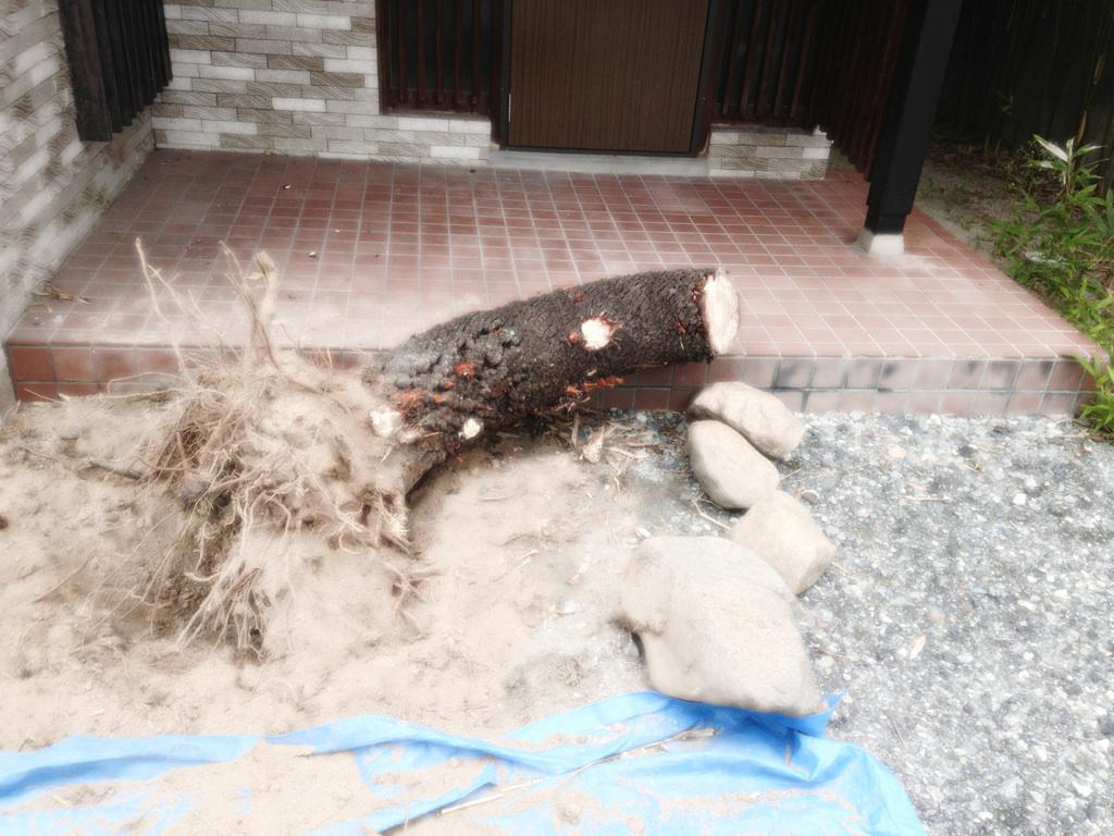 木を切り倒す