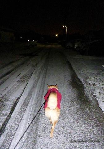 雪、降ったどー!