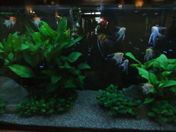 熱帯魚ブログ3