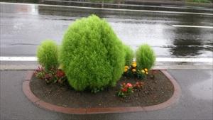 歩道の植木2_R