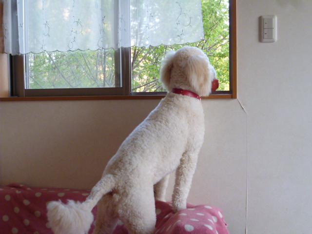 洗犬~散歩~48 054