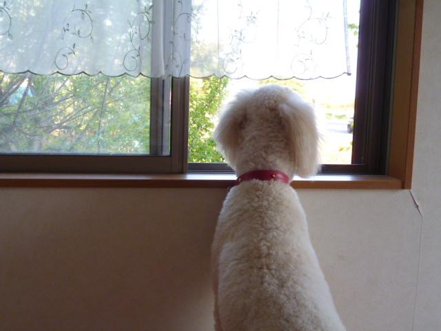洗犬~散歩~48 059