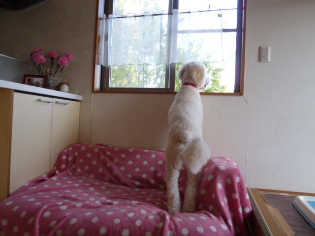 洗犬~散歩~48 056