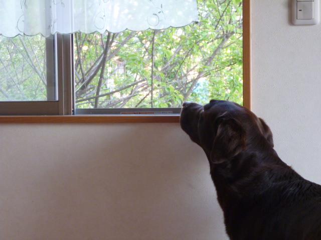 洗犬~散歩~48 064