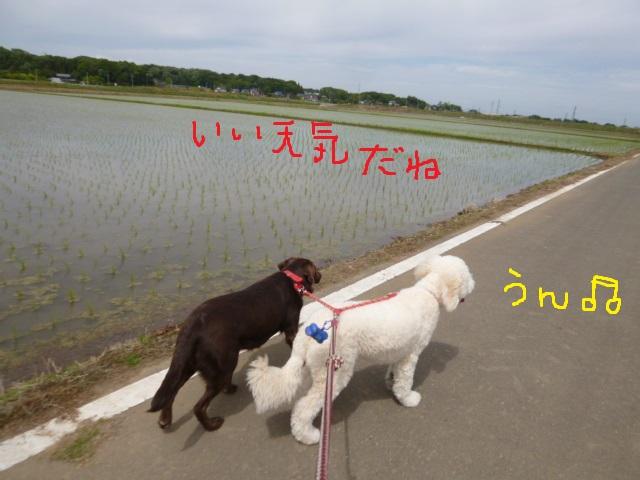 野球~散歩~おしっこ 110