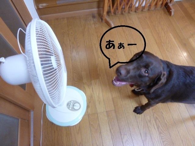 梅干し、扇風機 021