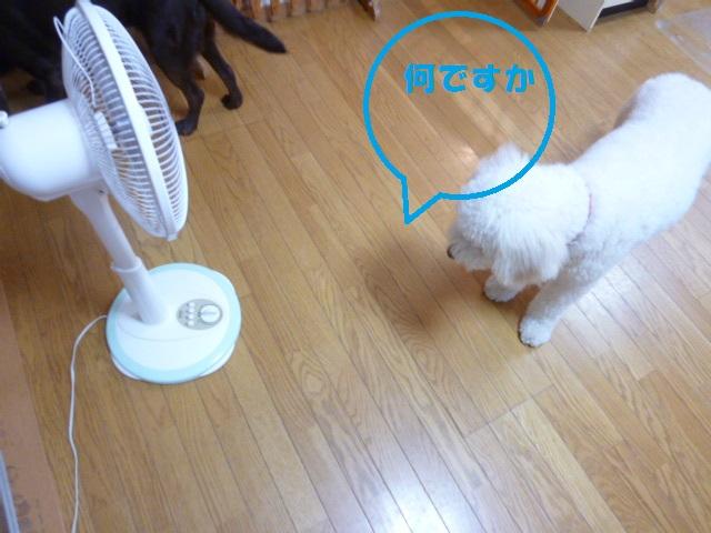 梅干し、扇風機 022
