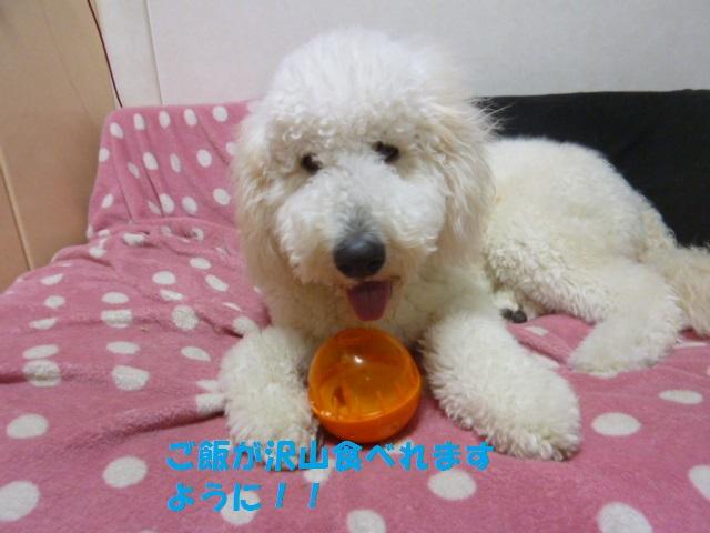 ボール遊び~破壊王 039