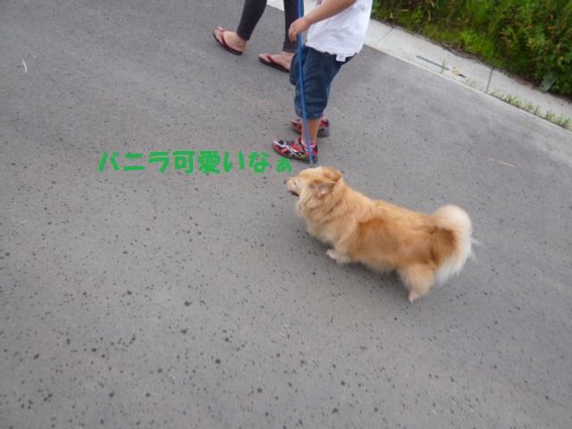 散歩 020