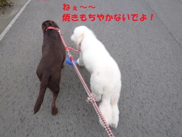 散歩 021