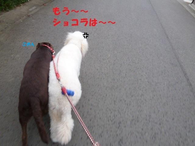 散歩 022