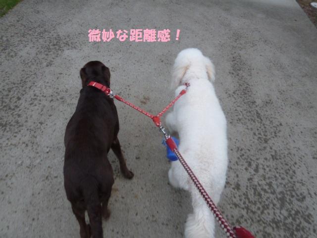 散歩 024