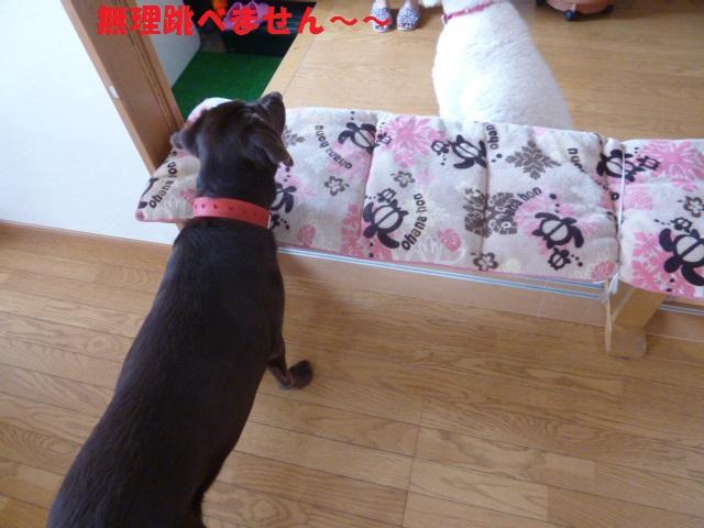跳び箱&カメ 017