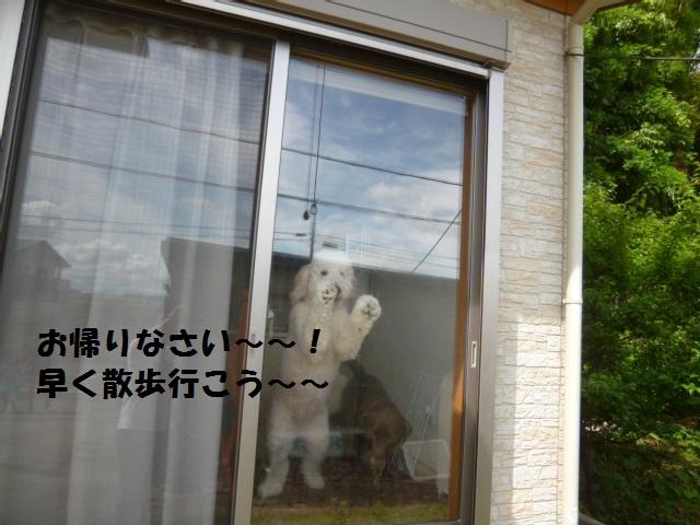 跳び箱&カメ 076
