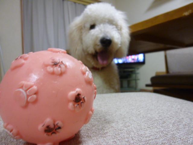 ボール遊び~破壊王 016
