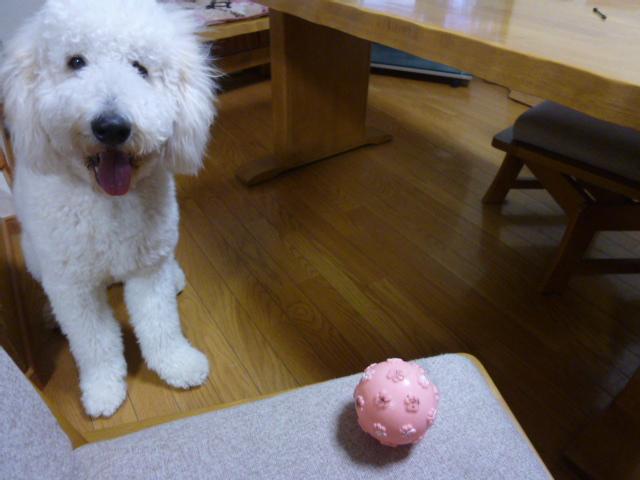 ボール遊び~破壊王 013