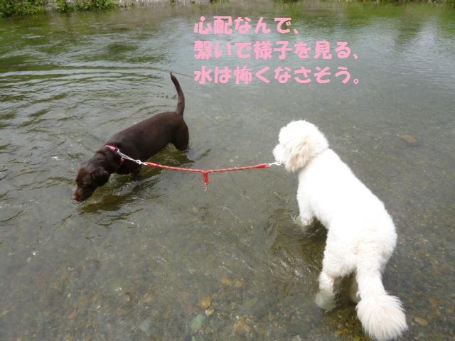 川遊び 002