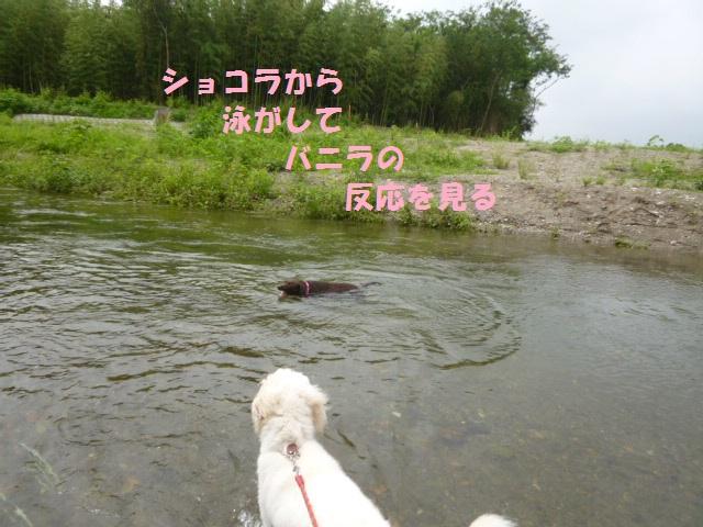川遊び 004