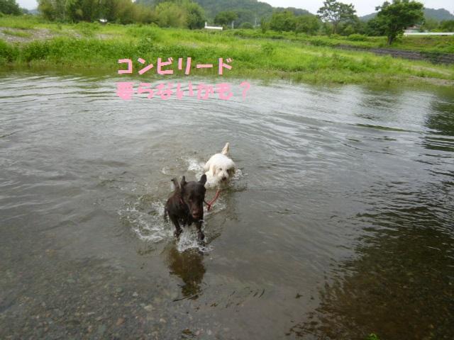 川遊び 026