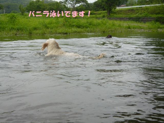 川遊び 119