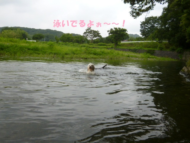 川遊び 126