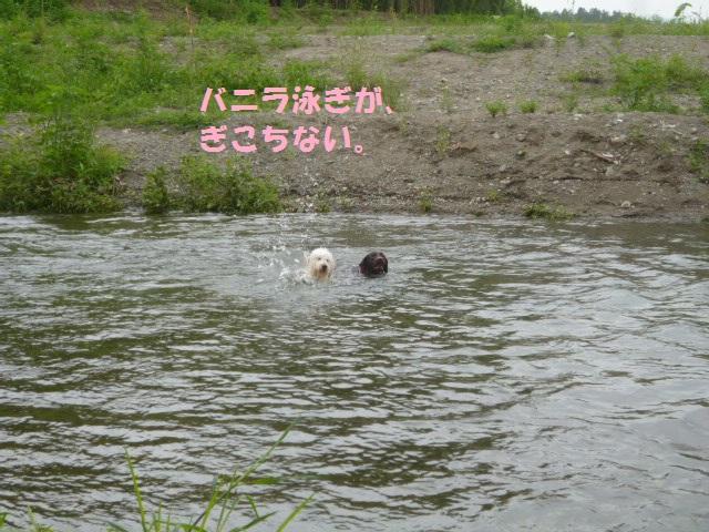 川遊び 131