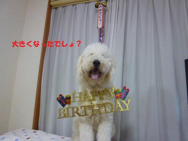 バニラの誕生日 032
