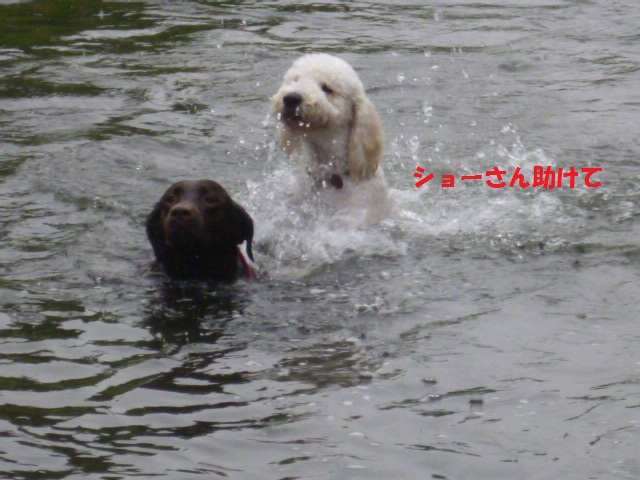 気になる~川遊び 012