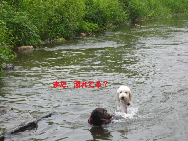 気になる~川遊び 031