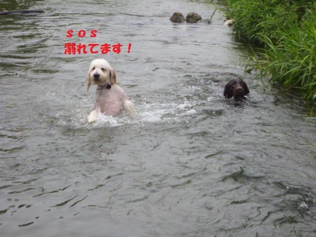 気になる~川遊び 065