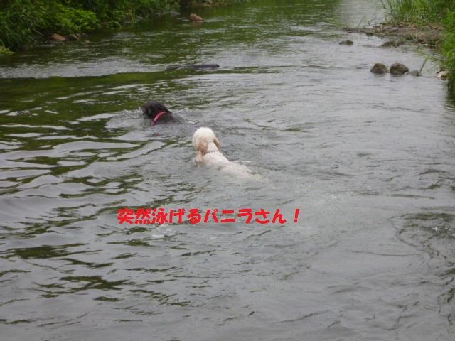 気になる~川遊び 055