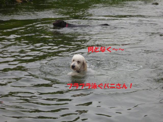 気になる~川遊び 147