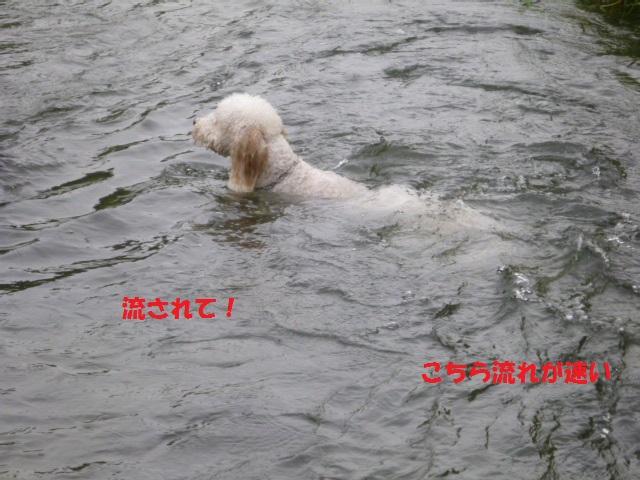気になる~川遊び 149