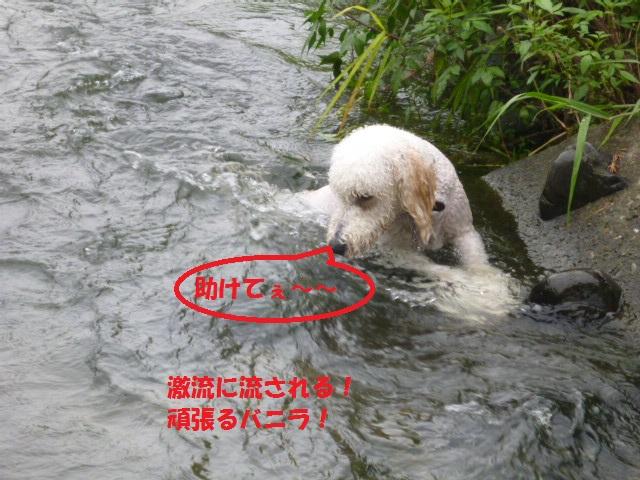 気になる~川遊び 151