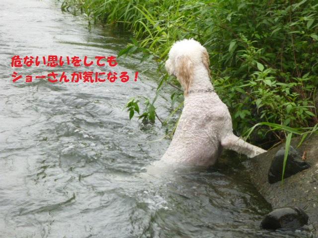 気になる~川遊び 153