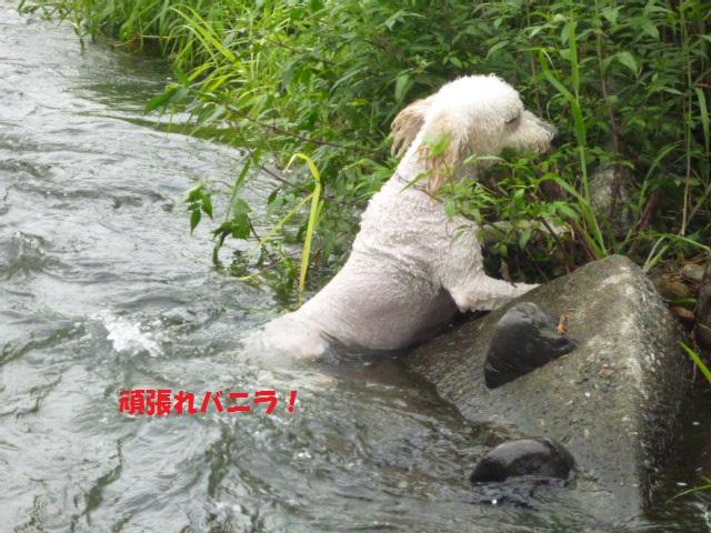 気になる~川遊び 155