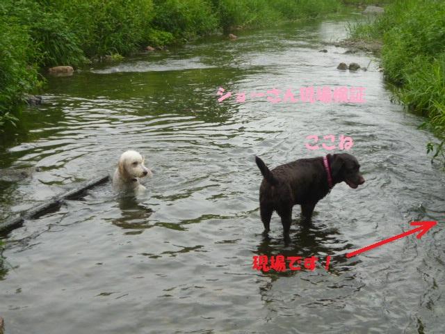気になる~川遊び 166