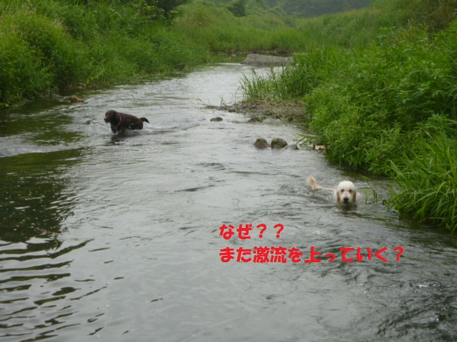 気になる~川遊び 172