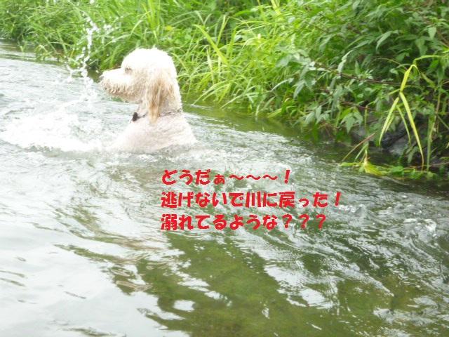 気になる~川遊び 201