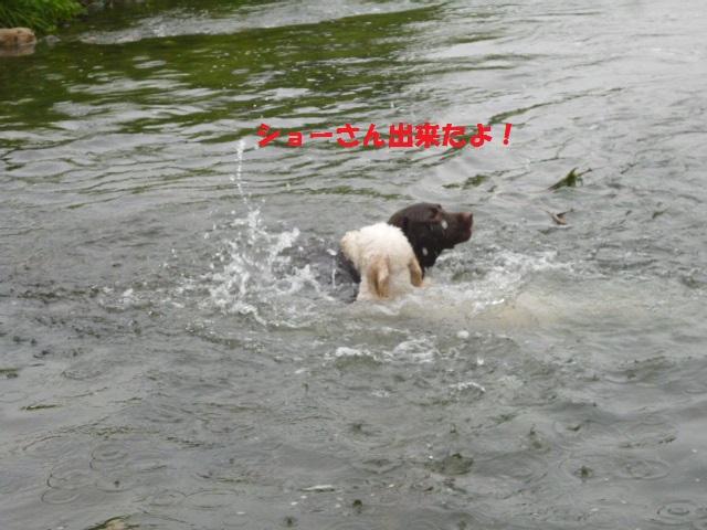気になる~川遊び 202