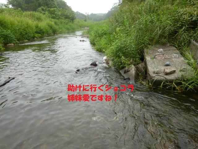 気になる~川遊び 141