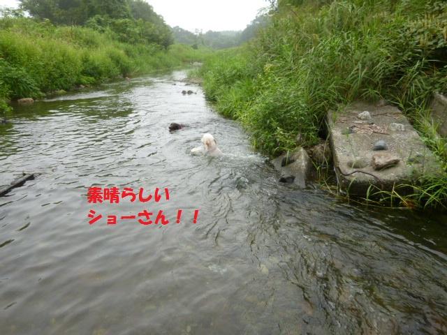 気になる~川遊び 142