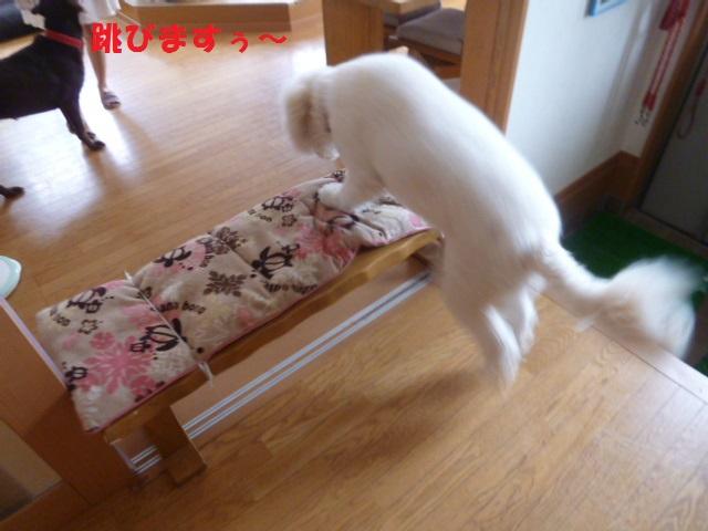 跳び箱&カメ 004
